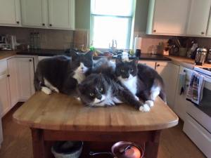 kitchen kitties